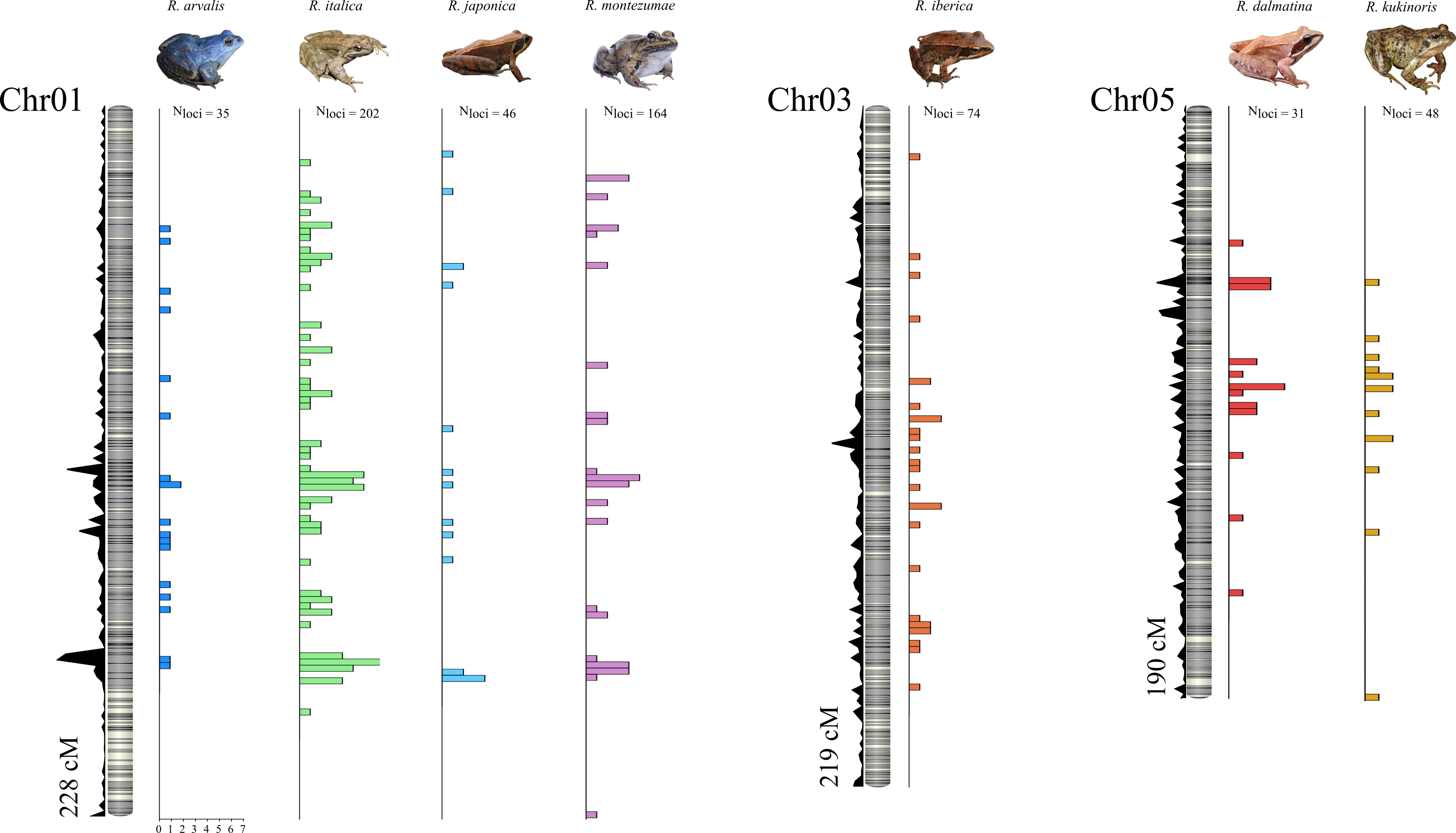 Sex linked markers on Frog sex chromosomes
