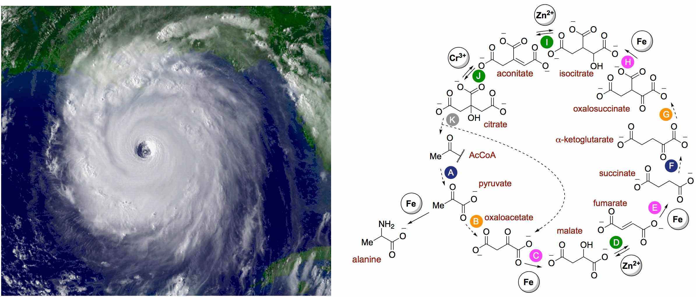 hurricane vs rTCA cycle