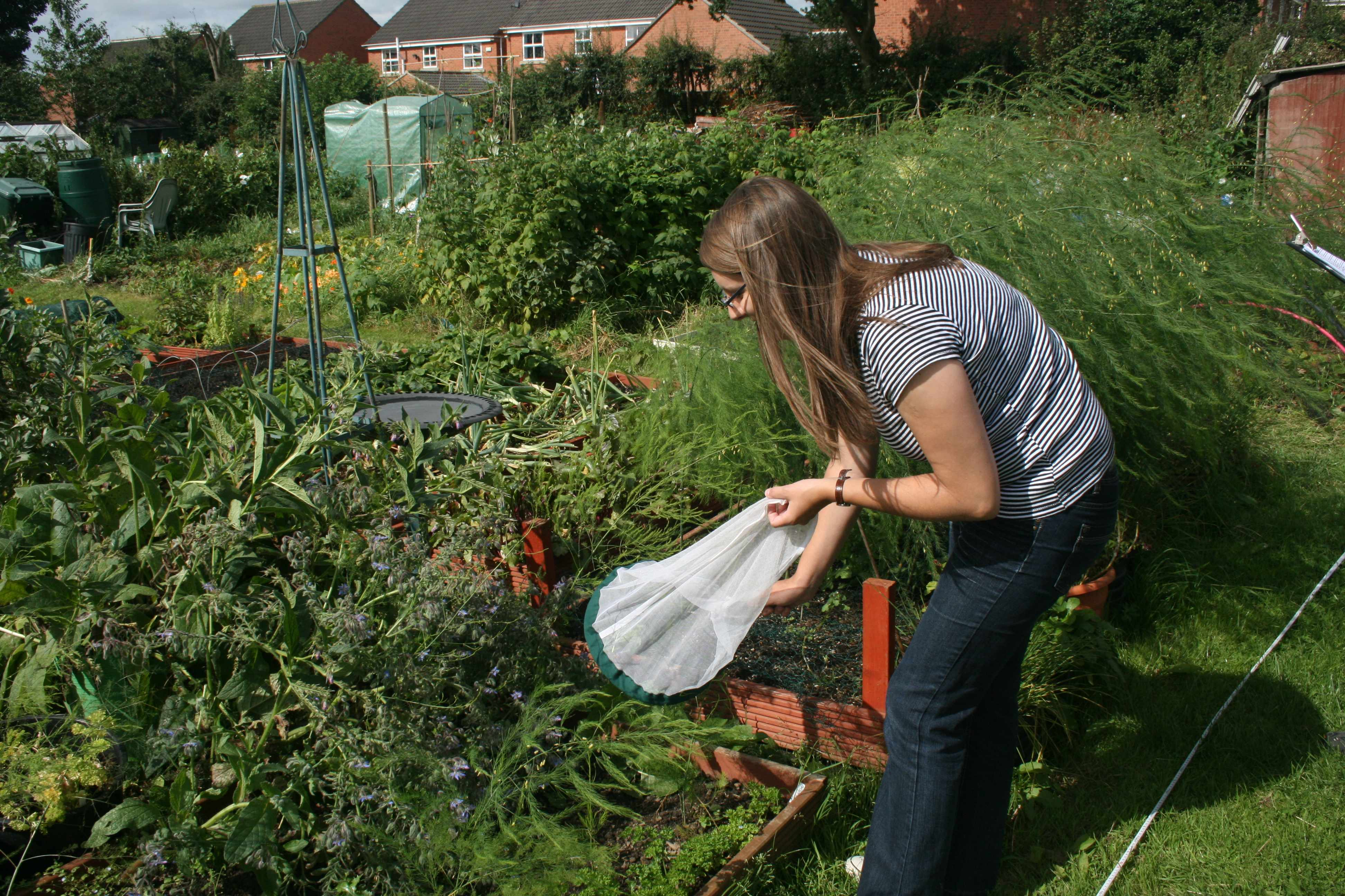 Sampling an allotment for pollinators in Leeds (Photo: K. Baldock)