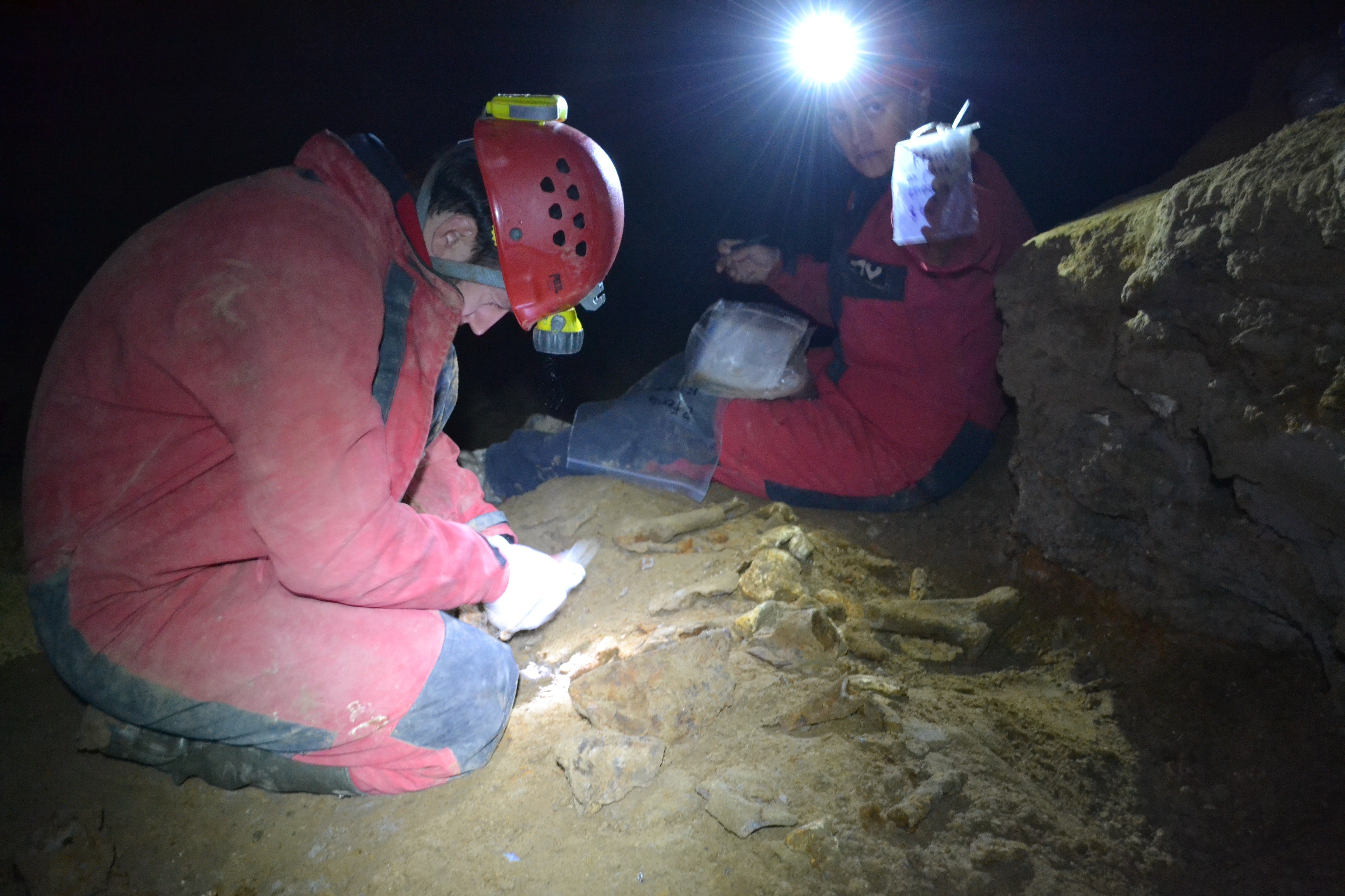 "Marius Robu and Ioana Meleg (""Emil Racoviță"" Institute of Speleology of the Romanian Academy) sampling cave bear bones (credit: Viorel Lascu)"
