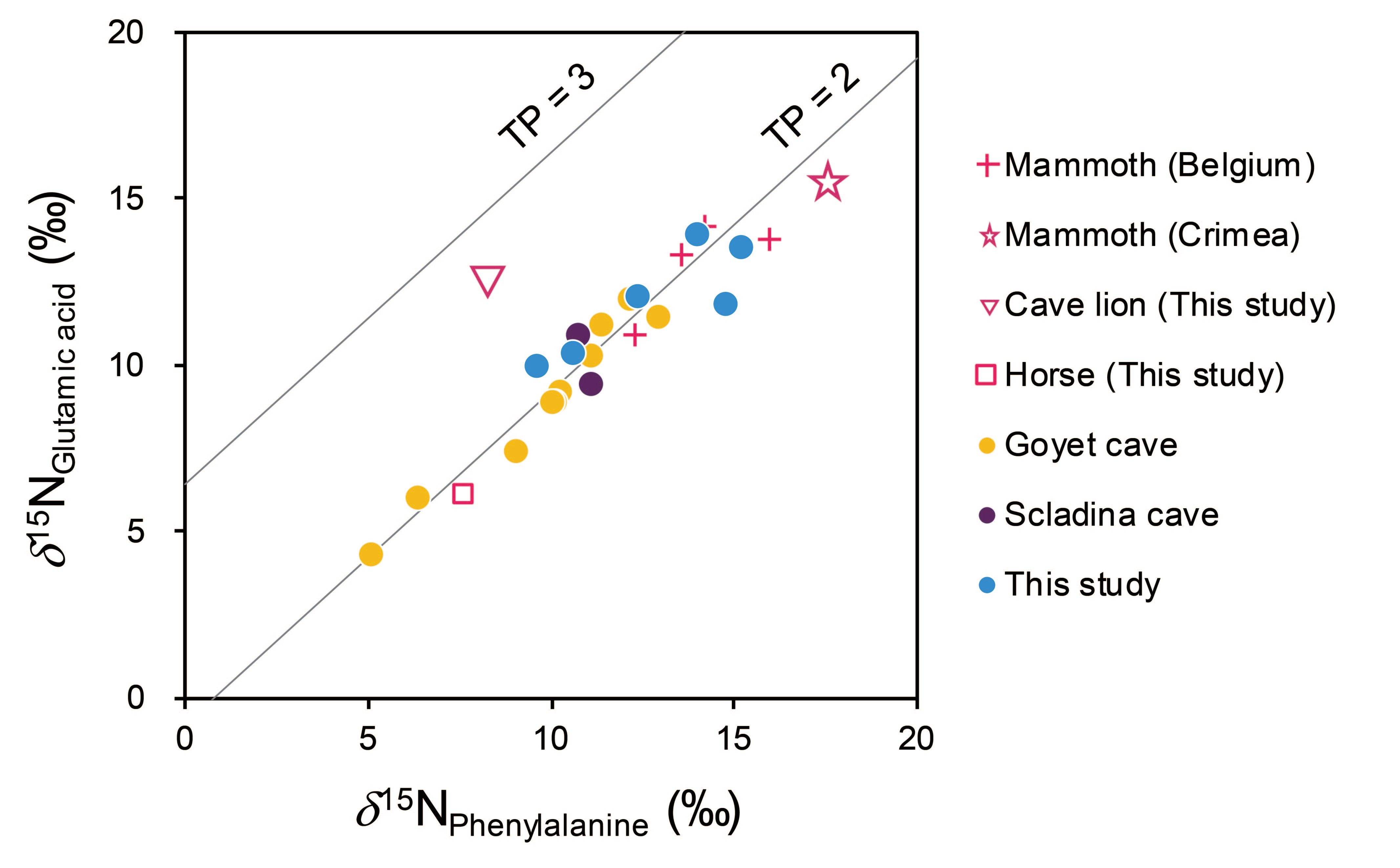 Nitrogen isotopic composition of glutamic acid and phenylalanine of the cave bears and reference animals from Romania and other regions in Europe. The solid lines of TP = 2 and TP = 3 indicate theoretical combinations of these two values for primary consumers (herbivores) and secondary consumers (carnivores), respectively, in terrestrial ecosystems (after Naito et al. 2020).