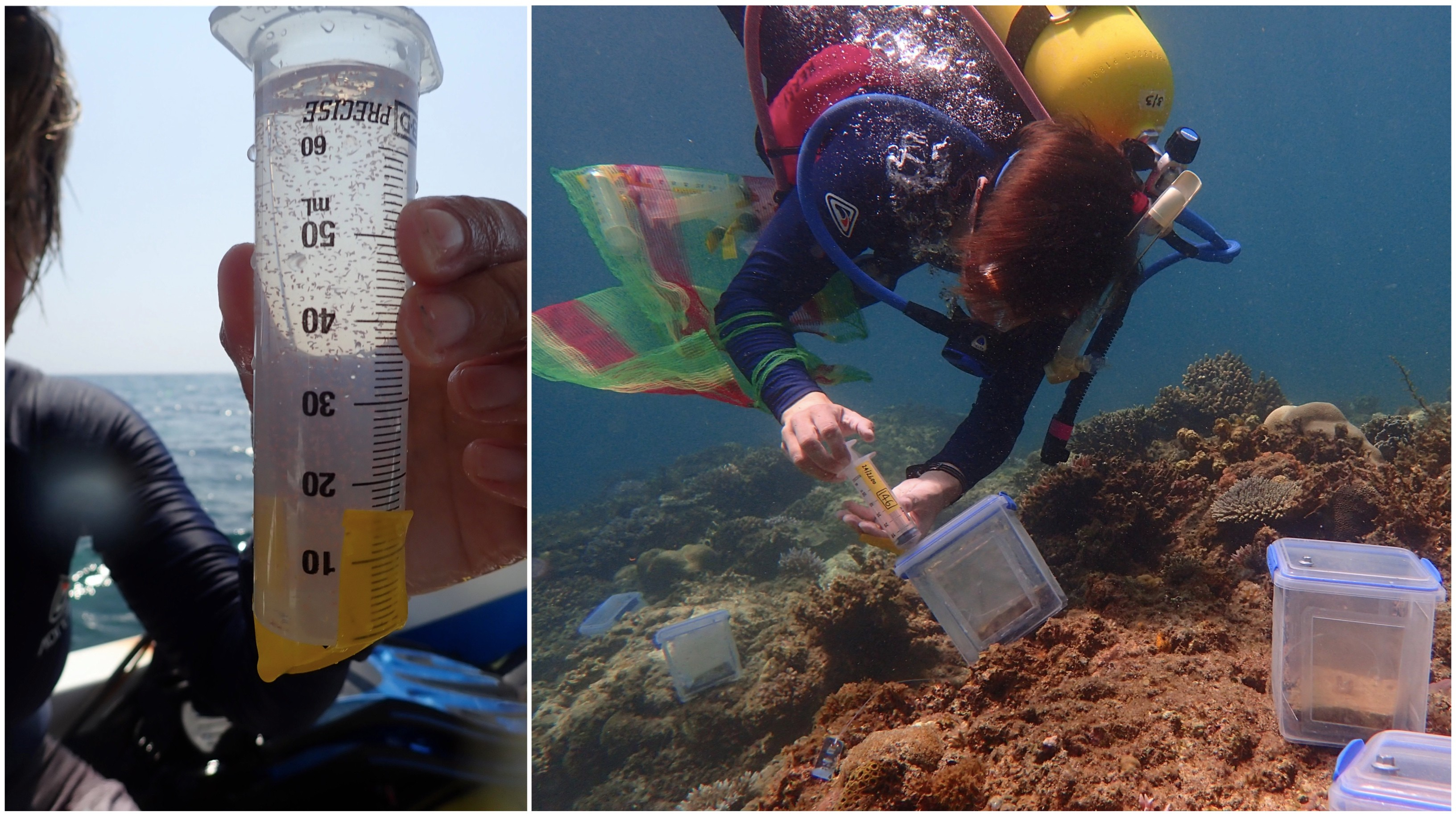 Injecting coral larvae
