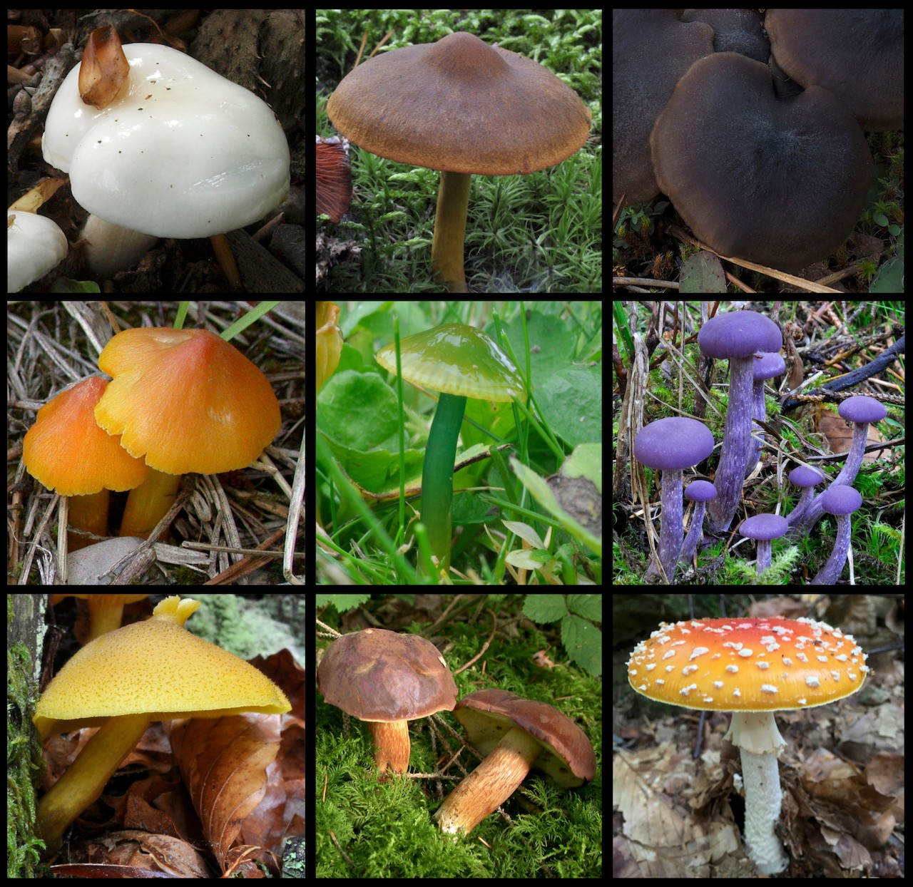 Color diversity of mushrooms